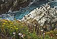 Cormorants and flowers