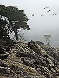 Cypress point in fog
