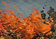 Orange flop