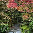 Pathway, Saiho-ji