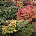 Colorful trees, Tofoku-ji