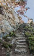 Point Lobos Stairway