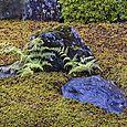 Rocks and Ferns, Zuiho-in