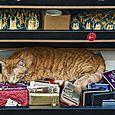 Shop cat #1