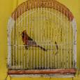 Caged cardinal