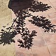 Bush shadow