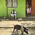 Palenque pig