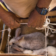 Yummy bunnies