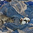 Cats and nets