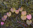 Leaf bow