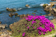 Seals and flowers