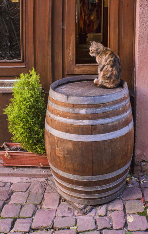 Cat and barrel copy