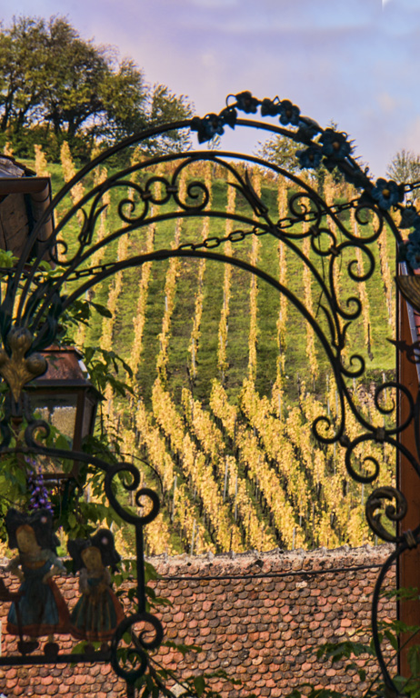Vineyard and sign