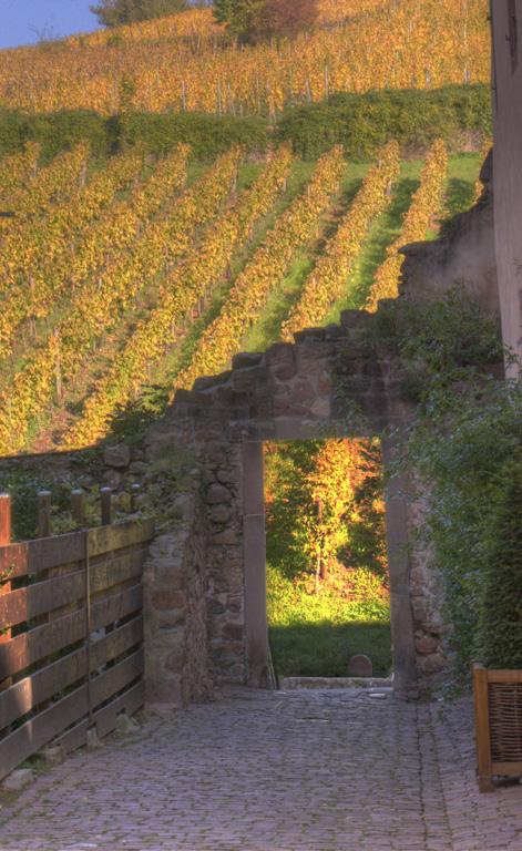 Wall and vineyard