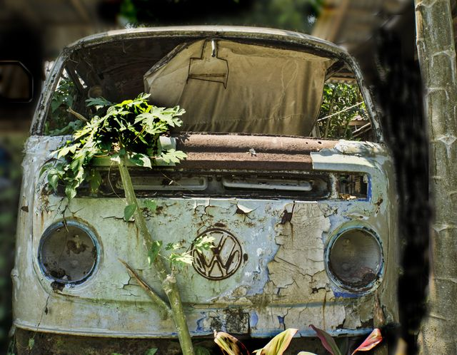 VW in the weeds