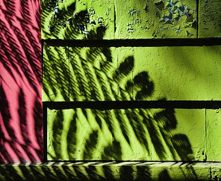 Leaf shadows