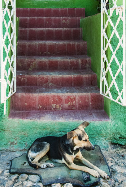 Dog and stair