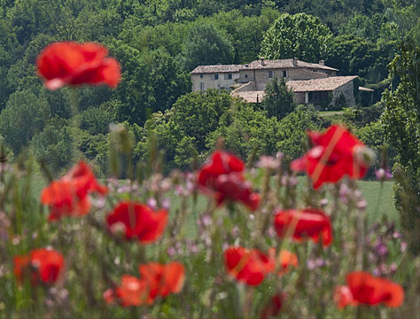 House and poppies