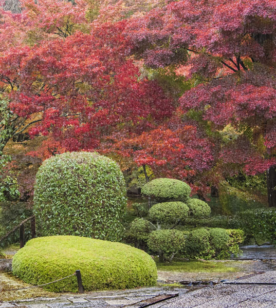 Bushes Saiho-ji