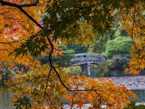 Leaves and bridge