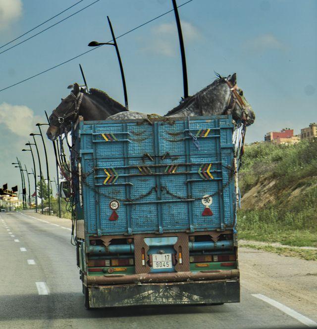 Horse truck