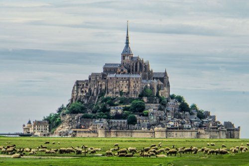 Mont St Michel with sheep