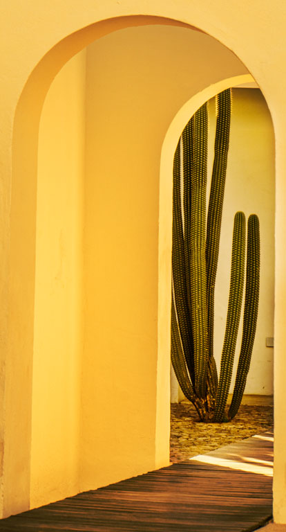 Cactus and arches