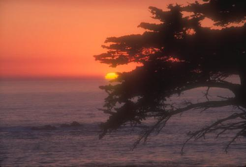 Sunset with cypress