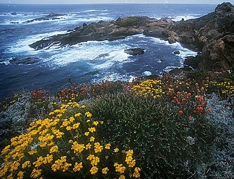 Sea Lion Cove